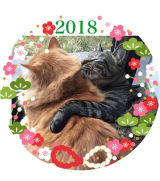 2018年リッキー&ミニョン.jpg