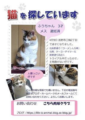 ふうちゃん捜索チラシ コピー用2.jpg