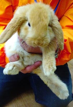 ウサギ3.JPG