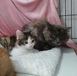 カノンちゃんと子猫達2.jpg