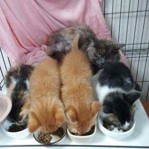 カノンちゃんと子猫達3.jpg