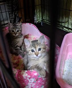 トラファルガー家の保護猫5JPG.JPG