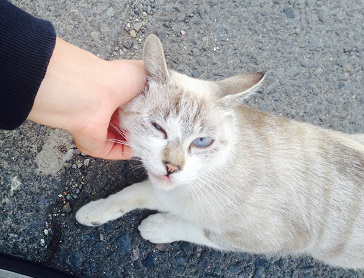 メス猫3.jpg