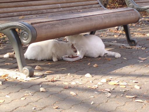 公園の猫.jpg
