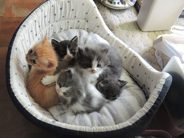 子猫達5月1日生まれ.JPG