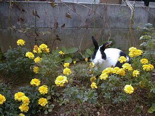 庭のミル.jpg