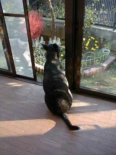 庭を眺めるミル.jpg