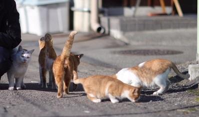 東急の駐車場付近の子達.jpg
