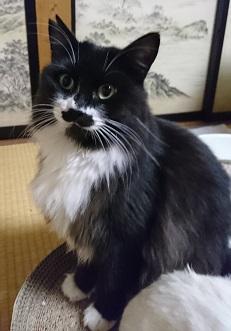 松代の保護猫育ての母猫.JPG