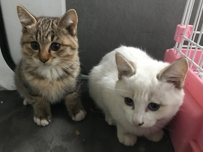 松代の保護猫2.jpeg