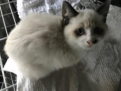 松代の保護猫3.jpeg