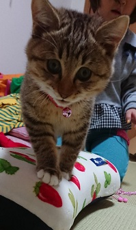 松代保護猫2.JPG