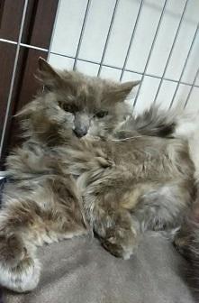 稲葉グレーの母猫.jpg