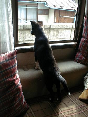 窓の外大好き.jpg
