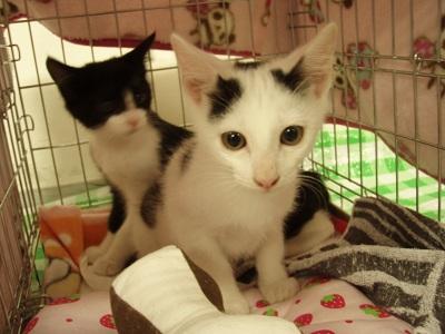 譲渡の猫達3.jpg
