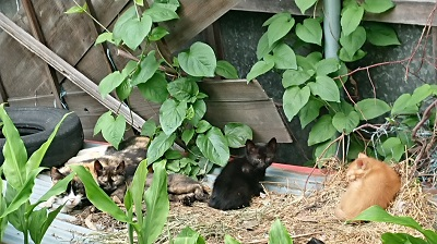 豊野のMさんの家の親子猫.JPG