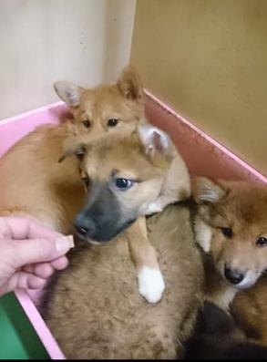 野犬の子犬3ヶ月.png
