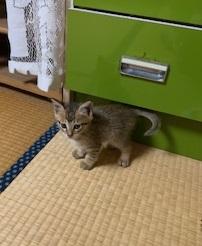 須坂の保護猫.jpeg