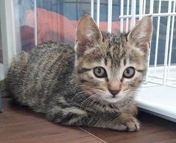 T市某所の保護猫キジトラ.jpg